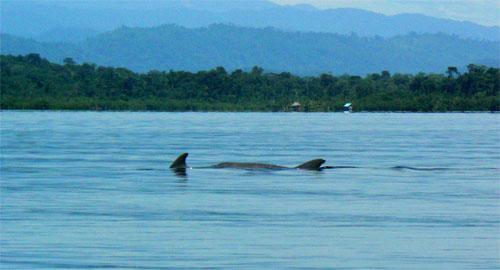 En la bahia de los delfines