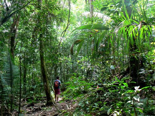 Caminando por Manuel Antonio