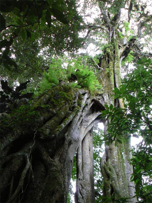 Vegetación en Monteverde